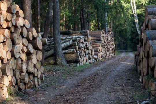 Penge i at skove træer på Bornholm
