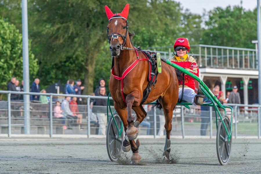 Heste på Bornholm fik ikke plads i svenske løb