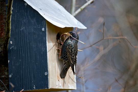 Fuglekasser giver fugle i haven