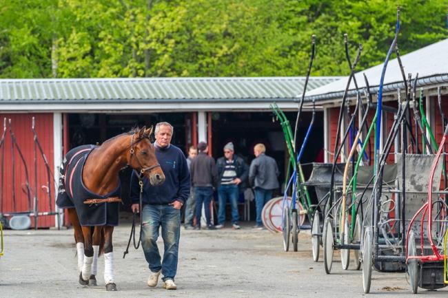 Stefan Lind-Holm-staldens nye hest ankommet