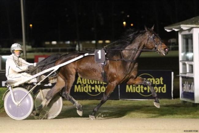 Bornholmsk delejet hest til tops i Aalborg
