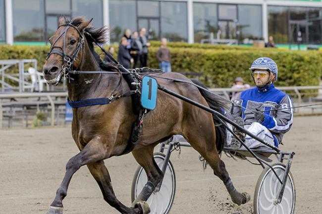 Bornholmers hest væk direkte i stort travløb i Sverige