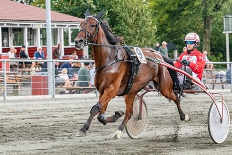 Stefan Lind-Holms stald har tre V5-favoritter