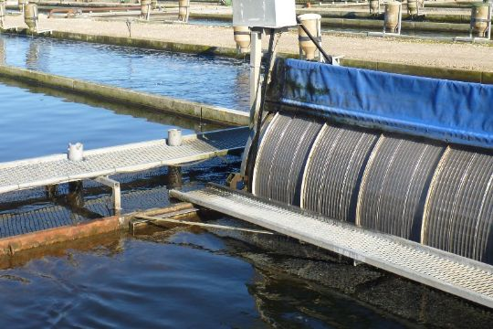 Nexø Havn arbejder intenst for nyt dambrug
