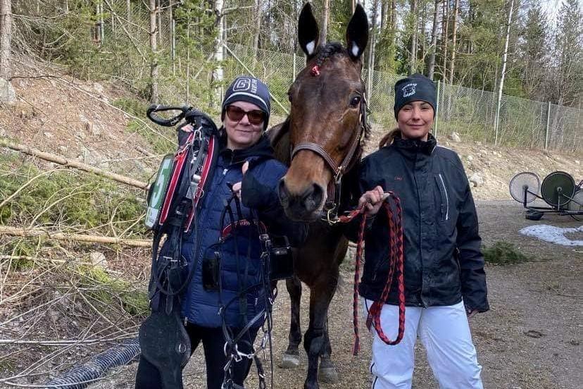 Bornholmsk opdrættet travhest til tops i Sverige