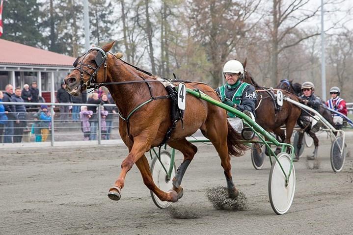 Pia og Lars-Erik Kaas med spændende hest i prøveløb