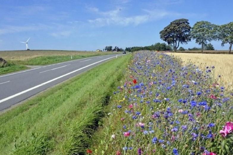 Vejarealer skal have mere blomsterflor