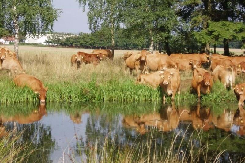 Landbruget sætter fokus på klima