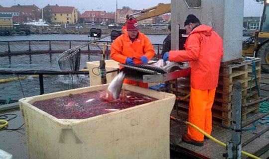 Aktionærer garanterer kapital til havbrug