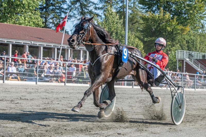 Mads Petersen og hans familie har solgt to heste