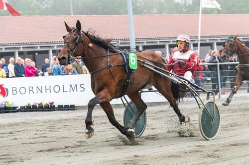 Bornholmsk champions opdræt til tops i Odense