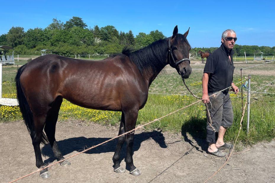 Ny hest til Stald Bornholm.nu
