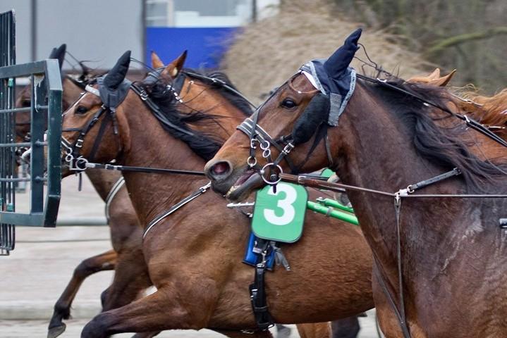 Andenplads til Betina Lunds hest i Sverige