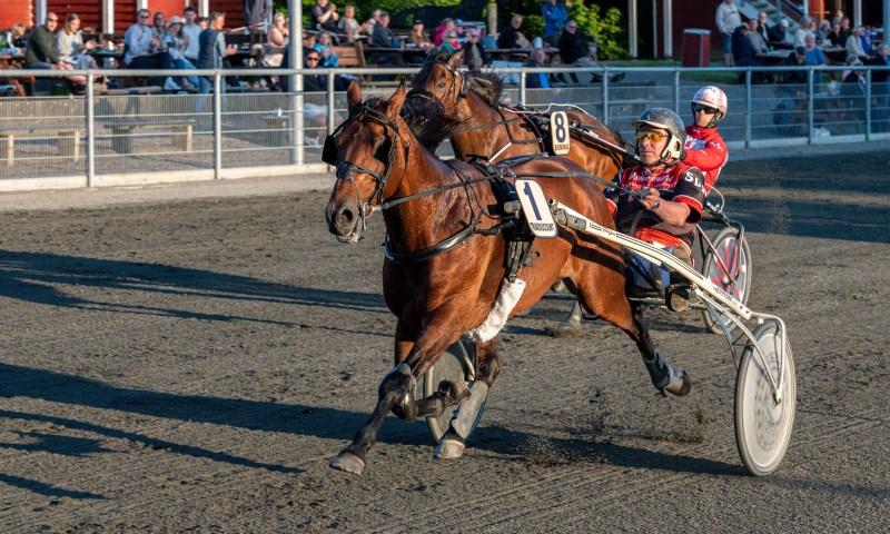 Syv af Bornholms bedste heste i direkte duel