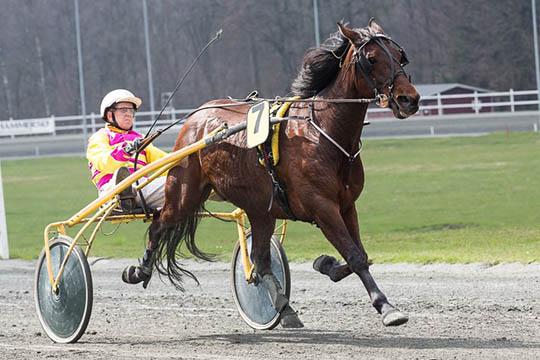 Hest udgået til løb i morgen på travbanen
