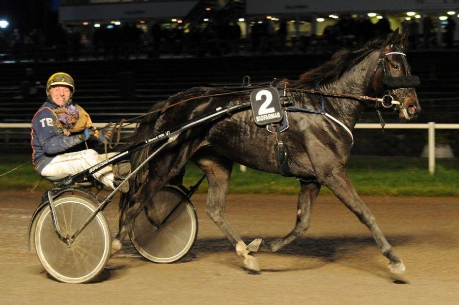 Stefan Lind-Holm med ny hest