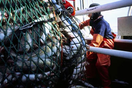 Underskud hos Tejn Trawl og Net ApS