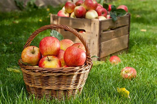 Fornuftig opbevaring af æbler