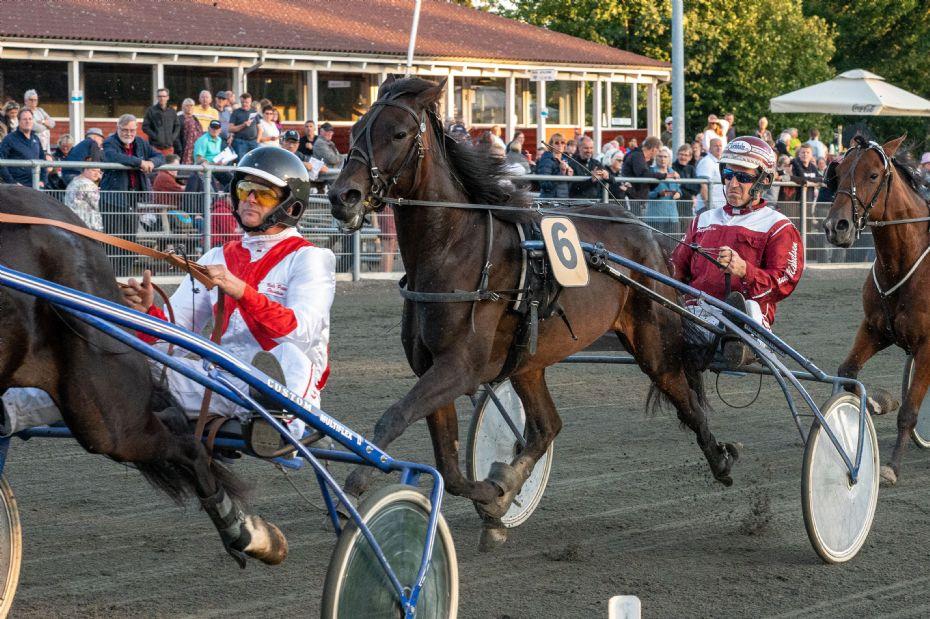 Otte heste klar til 3 Års Mesterskabet